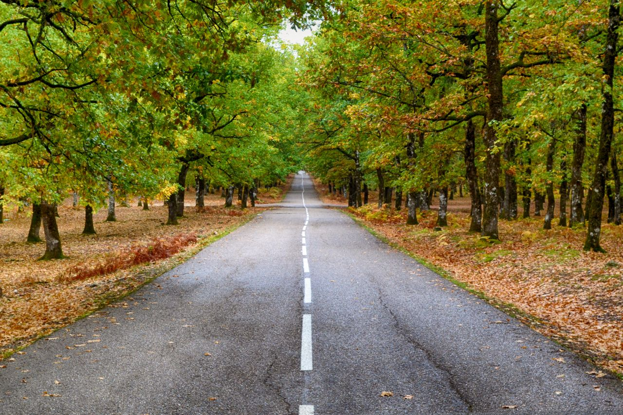road-lying-ahead-in-the-forest-greece_preview_f66f